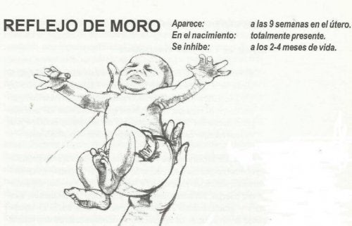 Le réflexe de Moro ou de défense chez le bébé