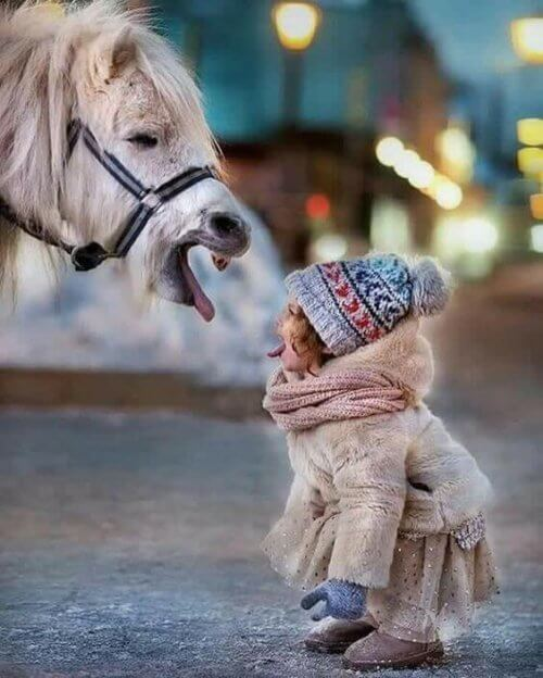 enfant et poney qui tirent la langue