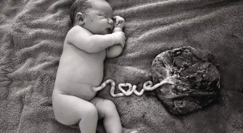 cordon ombilical et placenta
