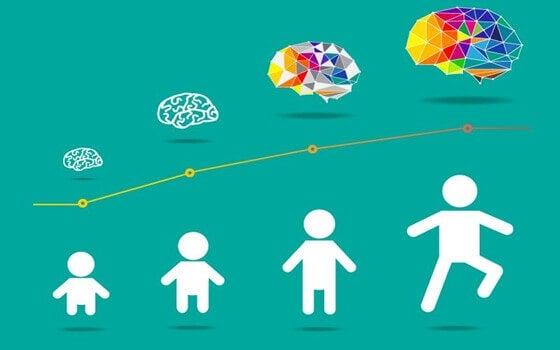 Les étapes du développement du cerveau.