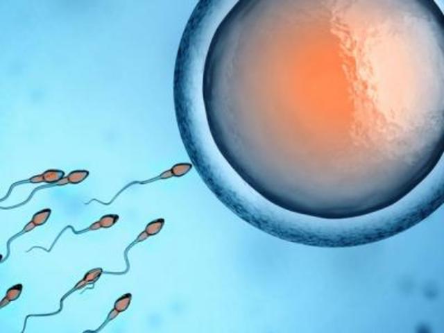 Mythes sur la fécondation ovule et spermatozoïdes