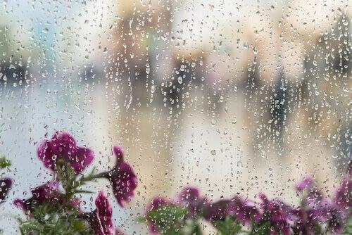 Le son que la pluie produit est un bruit blanc.