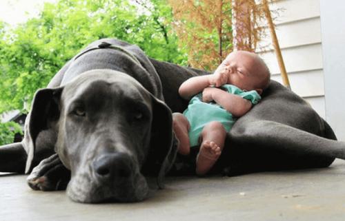 Devons-nous préparer notre animal à l'arrivée du bébé ?