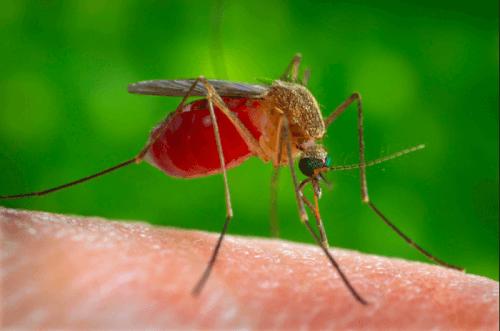 piqûres d'insectes - infection