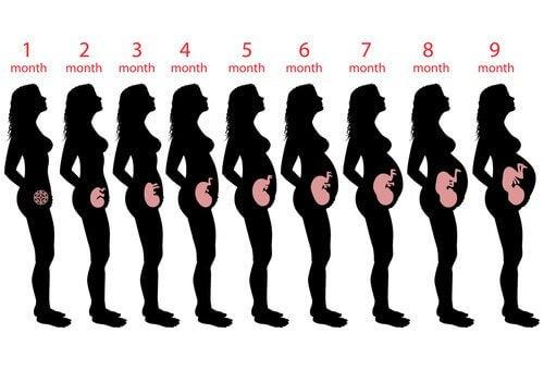 La 9ème semaine de grossesse