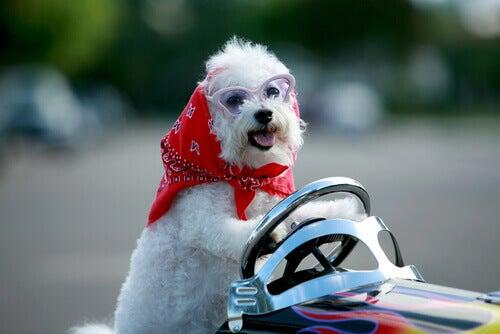 Les petits chiens pour enfants présentent de nombreux avantages pour leur développement et leur créativité.