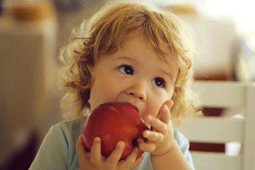 Un bébé mange une pomme