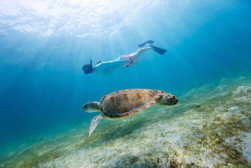 Les moniteurs de plongée sous-marine pour enfants doivent être des personnes spécialisées.