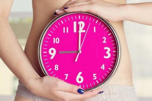 Quand le cycle menstruel commence, l'endomètre présente trois phases.
