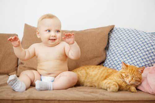 La cohabitation des nouveaux-nés avec les animaux est-elle recommandée ?