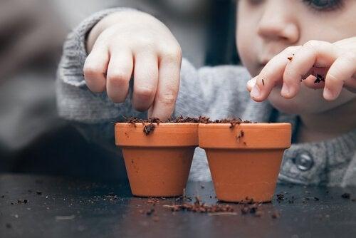 Comment semer des graines à la maison ?