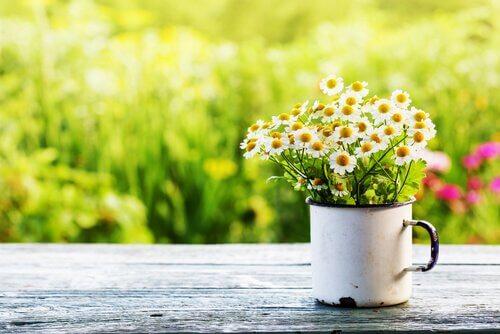 Au printemps, tout prend vie et se remplit d'activité, depuis les plantes et les animaux jusqu'aux êtres humains.