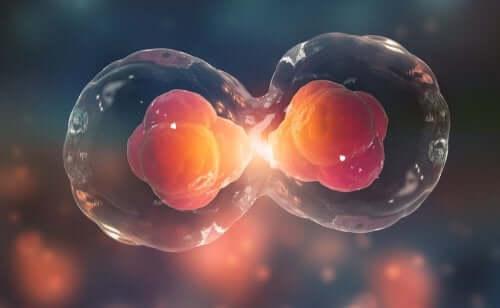 """La génétique expliquée aux enfants : qu""""est-ce qu""""un cycle cellulaire ?"""
