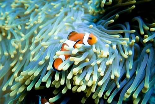 Film Nemo et la valeur de la famille