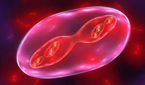 Les phases de la méiose expliquées aux enfants