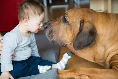 Comment les animaux de thérapie peuvent-ils aider les enfants ?