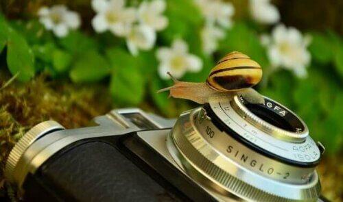 Un escargot sur un appareil photo