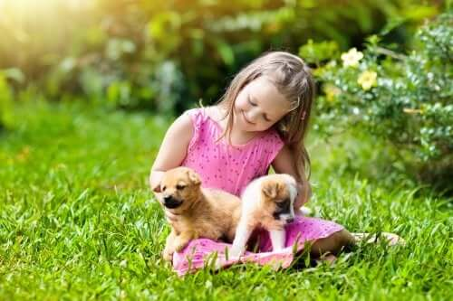 enfant qui joue avec ses chiens de compagnie