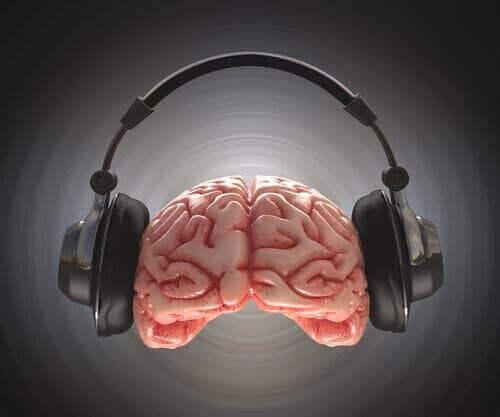 La musique et son effet sur le cerveau du jeune.