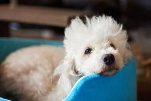 Quelques conseils pour éviter les morsures de chien.