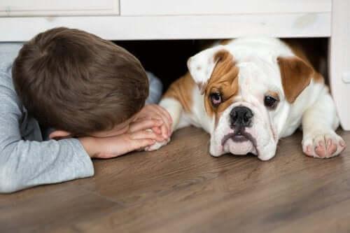 Les mesures à prendre face à une morsure de chien.