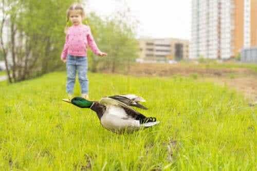 Mon enfant a peur des oiseaux, que dois-je faire ?