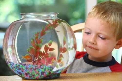 6 animaux de compagnie pour enfants qui nécessitent peu d'entretien