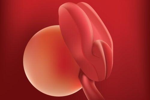 Semaine de grossesse 2: symptômes, développement et conseils