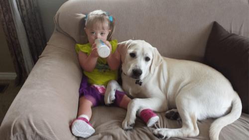L'histoire de Sadie, la petite fille atteinte du syndrome de Down et du chien qui s'occupe d'elle