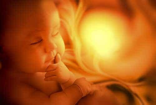 Développement du système respiratoire fœtal