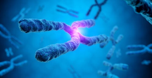 Qu'est-ce qu'une biopsie chorionique?